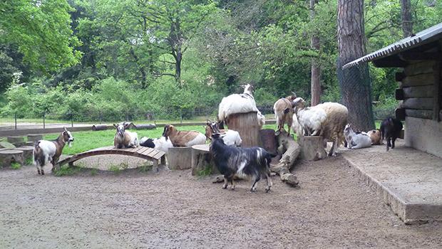 parco-naturale-cervia