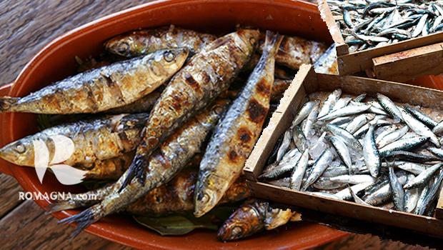 azzuro-pesce