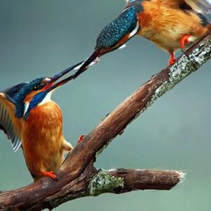 birdwatcng