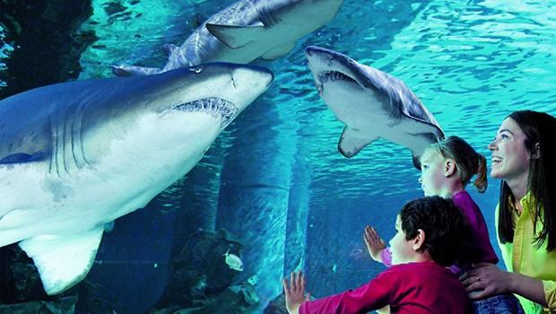 shark-cattolica-acquario
