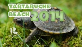tartarughebeach